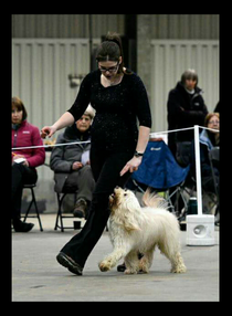 Wakefield Dog Training Club Co Uk